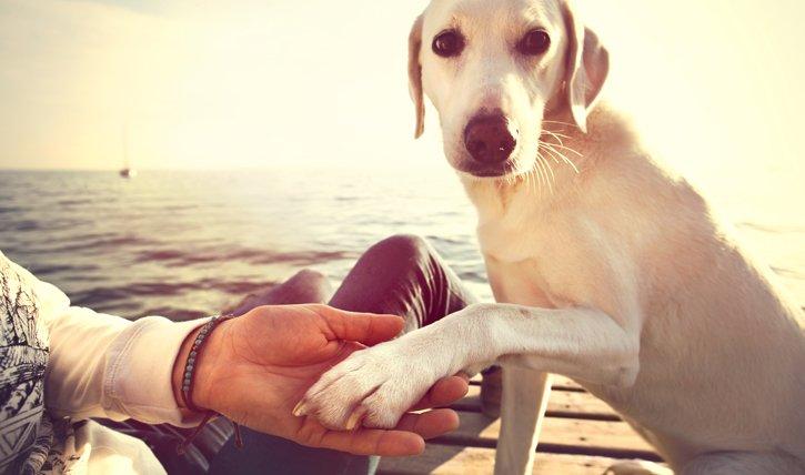 Haustier-Test: Welcher Hund passt zu mir? - Tests - Femelle.ch