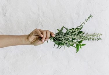 Natürlich heilen: Der grosse Heilpflanzen-Guide