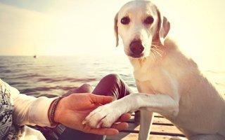 Haustier-Test: Welcher Hund passt zu mir?