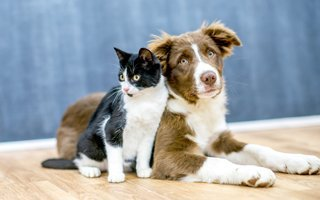 Tier-Test: Welches Haustier passt zu mir?