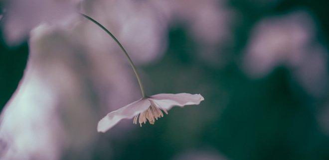 Bachblüten: Anwendung und Wirkung der Tropfen