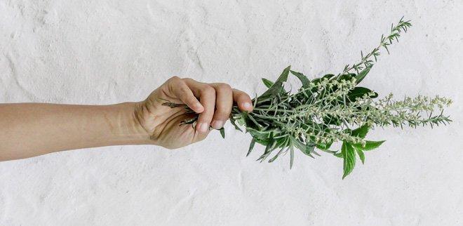 Diese Heilpflanzen bewirken wahre Wunder.