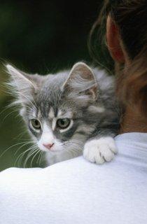Katzen-Test: Welche Katze passt zu mir?