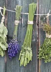 Kräuter pflanzen wir jetzt selber! Anleitung für den DIY-Kräutergarten