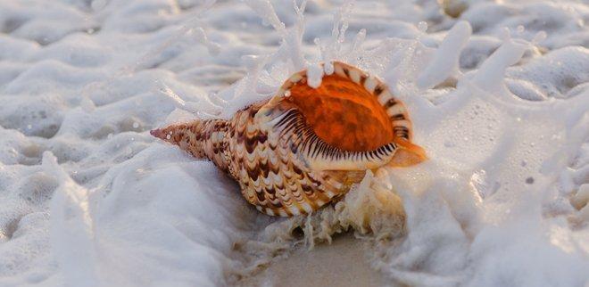 Muschel im Meer