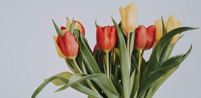 Wie bleiben Tulpen länger frisch? So bleiben Tulpen länger haltbar!