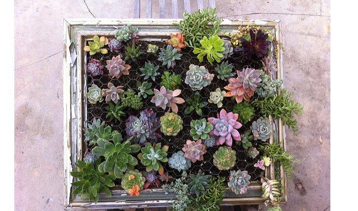 Ein Pflanzenbild lässt sich mit Sukkulenten wunderschön gestalten. Hier findest du eine Schritt-für-Schritt-Anleitung.
