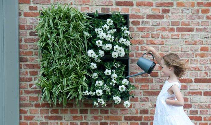 Pflanzenwand Bauen pflanzenwand selber bauen das wichtigste how für den wandgarten