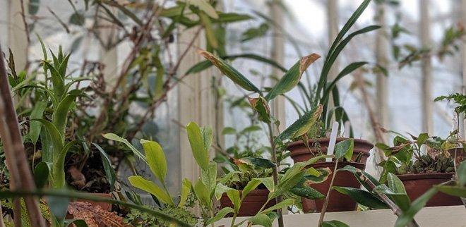 Mit diesen 5 Tipps überwinter Pflanzen perfekt.