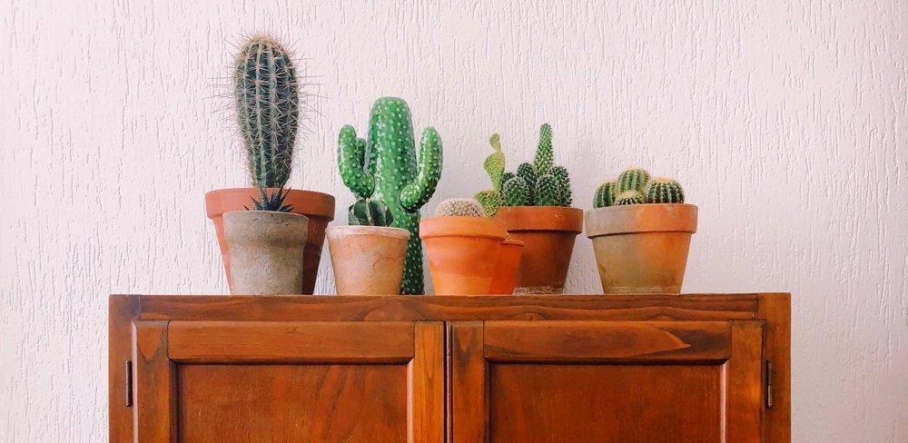 Diese pflegeleichten Zimmerpflanzen brauchen wenig Wasser