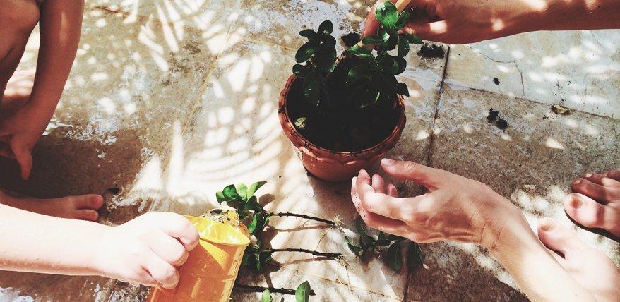Mit diesen Tipps gehen deine Zimmerpflanzen garantiert nicht mehr ein.