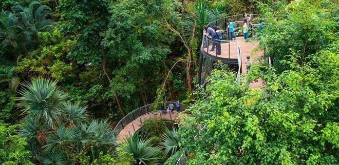 Ausflüge zu zweit: Der tropische Regenwald wirst erst des nachts so richtig aktiv