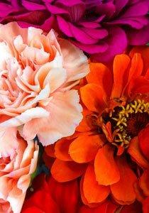 Blütezeit: Ab jetzt schenken wir uns Blumen im Abo selbst!