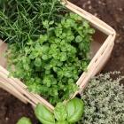 Tipp gegen Langeweile: Kräutergarten anlegen