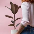 Tipp gegen Langeweile: Pflanzenpflege