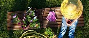 Pflanzen überwintern: Nur die Harten bleiben im Garten