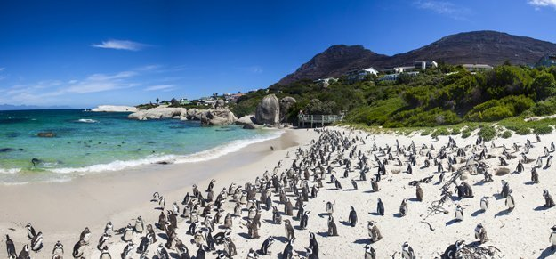 Kapstadt Boulders Beach ist eine der beliebtesten Sehenswürdigkeiten rund um Kapstadt.