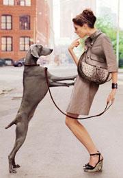 Test: Welcher Hund passt zu mir?