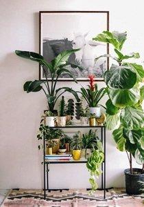 Diese 12 Zimmerpflanzen brauchen kaum Licht