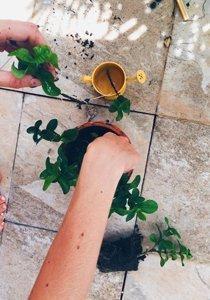 10 Gründe, warum deine Zimmerpflanzen eingehen