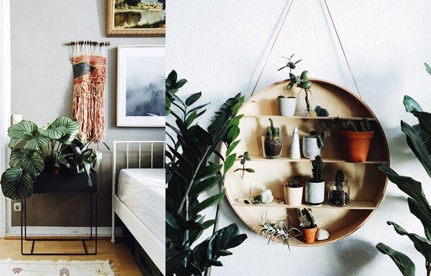 Diese wohntrends bleiben uns auch 2017 erhalten for Zimmerpflanzen trend